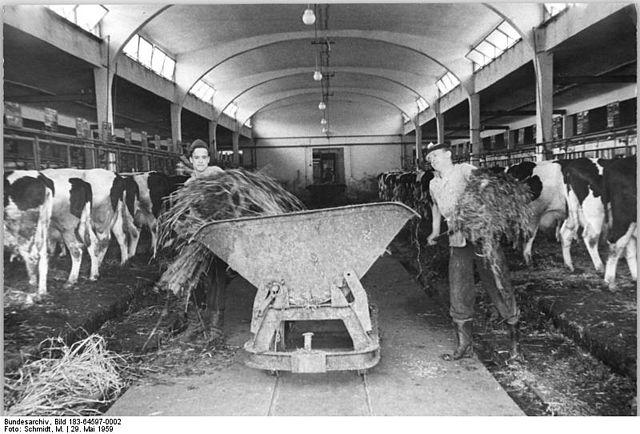 Bundesarchiv_Bild_183-64597-0002,_Hobrechtsfelde,_Bauern_beim_Ausmisten